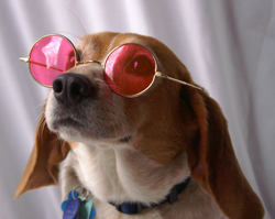 Put on Your Rose Colored Glasses, Please!
